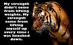 Principles Of Strength…